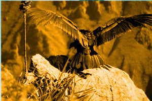 Das Lied des Sonnenkondors