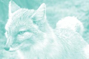 Der gefrorene Fuchs