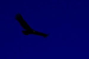 Schlägt die Nacht mit schwarzen Flügeln