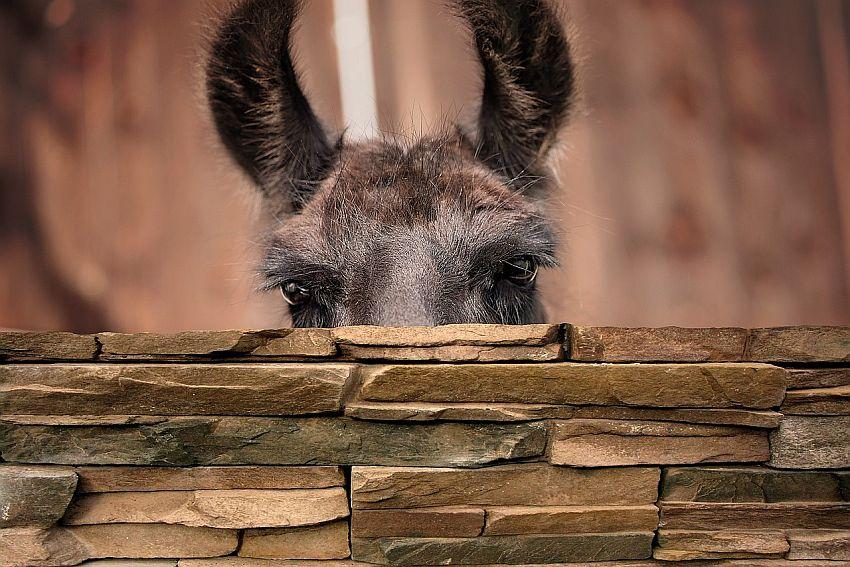 Hallo, ist da jemand? – Oder: Der stille Februar
